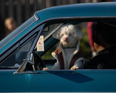 Hoteles en Gulf Shores, AL que admiten mascotas
