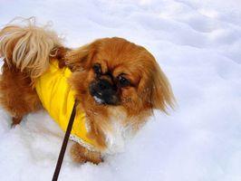 Cómo ir al baño del tren Cachorros en tiempo frío