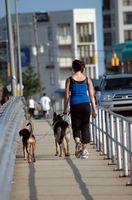Dog-Friendly Hoteles en el puerto de la zona interior de Baltimore, Maryland