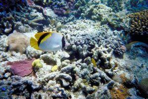 10 datos sobre el Mar del Coral