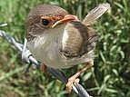Cómo hacer ardilla Bird Prueba la semilla de alimentos