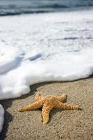 Lo Hábitat Qué exige una estrella de mar?