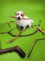 Cómo Autoconsciente es un perro?