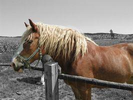 Cómo mejorar Línea superior de su caballo