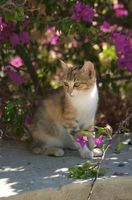 Enfermedades de los Gatos que causan bajo recuento de glóbulos blancos