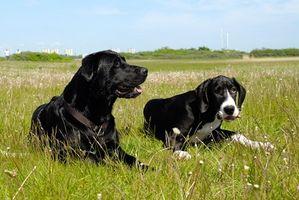 Nombres de malas hierbas para perros