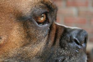 Convulsiones y tumores cerebrales en los perros