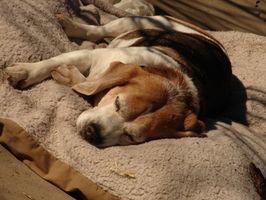 Moteles de perros mascotas en Lake Tahoe