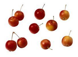 Manzanas silvestres como alimento