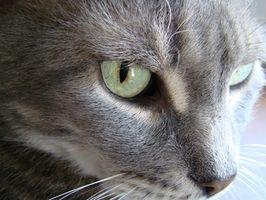 Problemas con la piel seca en los gatos