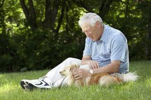 Acerca de páncreas Los tumores en los perros