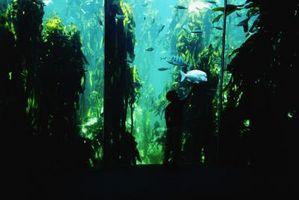 Sal del agua del acuario Plagas