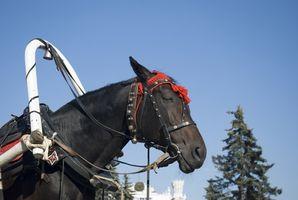 Cómo conectar un caballo hasta Buggy arnés