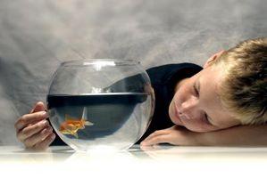 Cómo hacer un telón de fondo de fibra de vidrio del tanque de pescados
