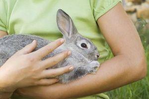 Hábitos alimenticios conejos domésticos '