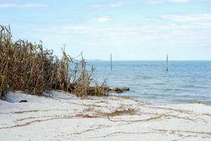Campamentos más cercano a Longboat Key, Florida