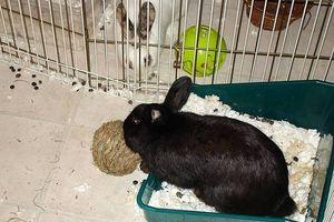 La mejor manera de entrenar a un conejo