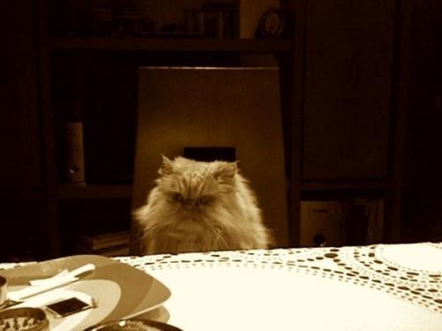 Los gatos pueden morir de estreñimiento?