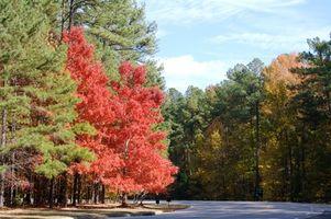 Visitas Guiadas en Carolina del Norte
