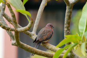 Cómo Obtener un ave como mascota de un árbol