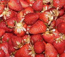 Efectos nutricionales de la liofilización de alimentos