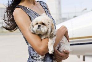 ¿Qué se puede poner en el césped para mantener a los perros fuera de ella?
