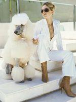 Consejos sobre el cuidado del cabello en los caniches
