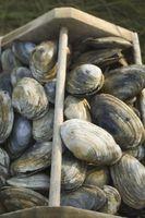 Cómo transportar almejas frescas con Alga Marina