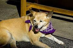 Parásitos y diarrea en los perros
