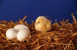 Ideas para Incubadoras de huevo hechos en casa