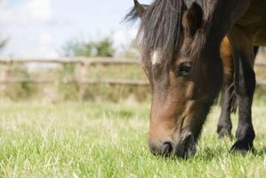 Cómo alimentar un caballo de levadura