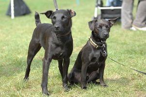 ¿Cuáles son los tratamientos para la caspa de perro?