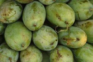 Cómo madurar mangos en el Hogar