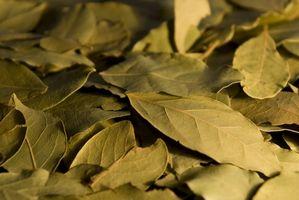 Cómo secar hojas de laurel fresco