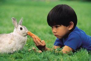 Las semillas que son tóxicos para los conejos