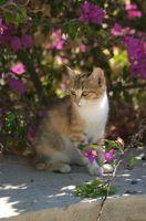 Remedios holísticos para un gato moribundo