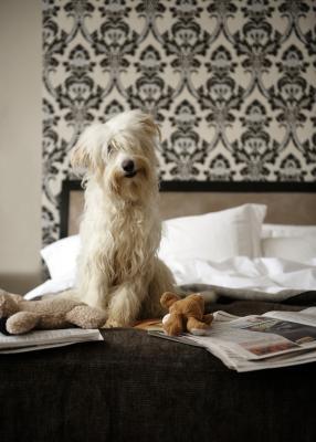 Juguetes para perros caseros de los artículos del hogar