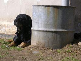 ¿Qué es la Ley de vacunación canina en Missouri?
