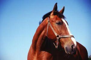 Cómo encontrar un caballo americano por un número de tatuaje