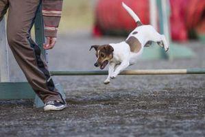 Cuáles son las diferencias entre los perros CKC y AKC registrados?