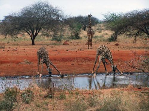 Principales del suelo y características del agua de Nigeria