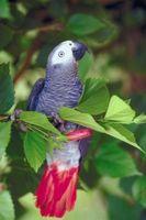 Cómo evitar que las aves Plucking