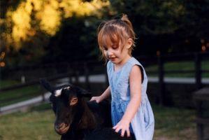 Cómo quitar los cuernos de la cabra con Bandas