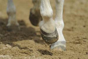 Remedio casero para los rasguños en los caballos