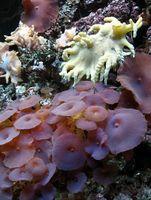 Sustrato en los arrecifes de coral