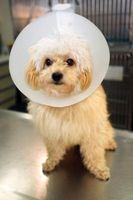 Causas y Curas para la pérdida del pelo en los perros