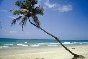 Los buenos lugares para encontrar conchas marinas en el Condado de Pinellas, Florida