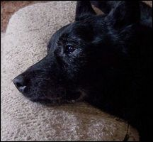 Los signos de apoderamiento actividad de los perros