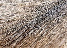 Cómo donar PERRO pelo o piel de gato para hacer alfombras de pelo y plumas para limpiar derrames de petróleo