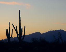 Top Ten de las ciudades más grandes en Arizona